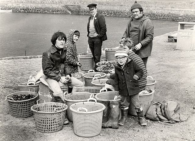 Mussel Pickers at the Harbour