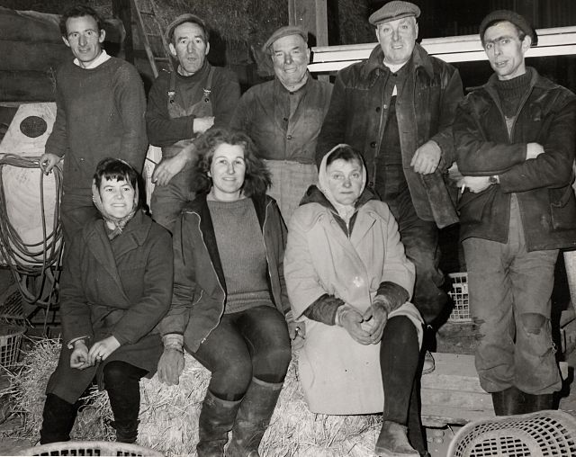 Tattie Pickers at Rosefarm