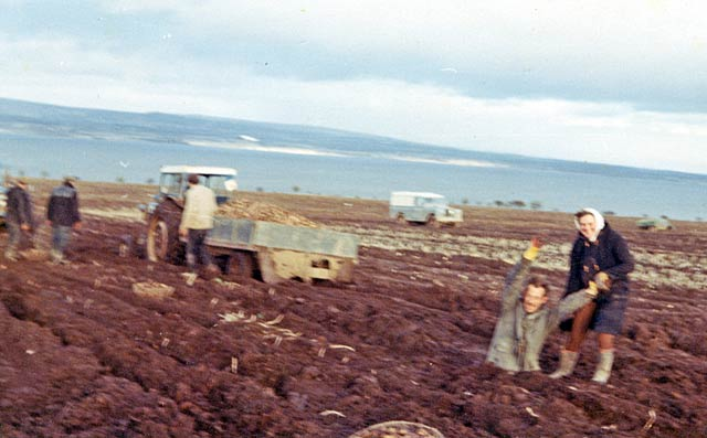 Mud at Rosefarm 1967