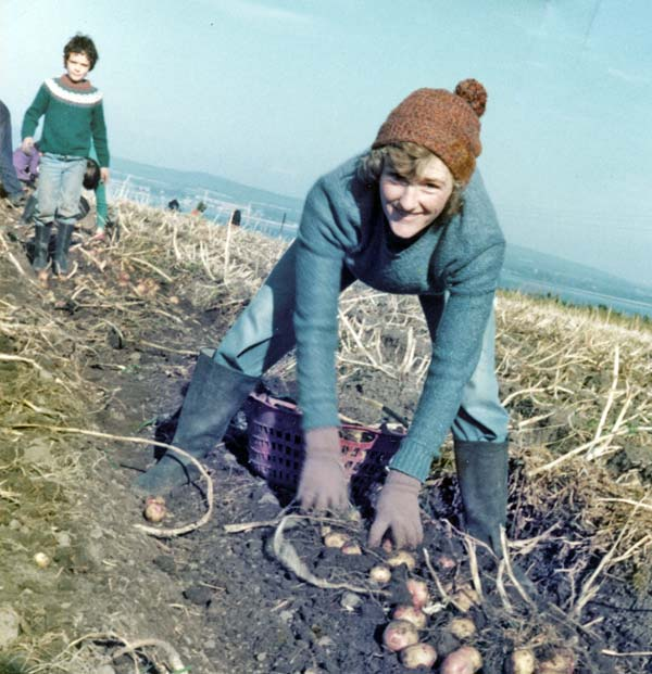 Tattie picker at Rosefarm
