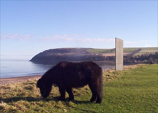 Shetland Pony on the Links - 2003