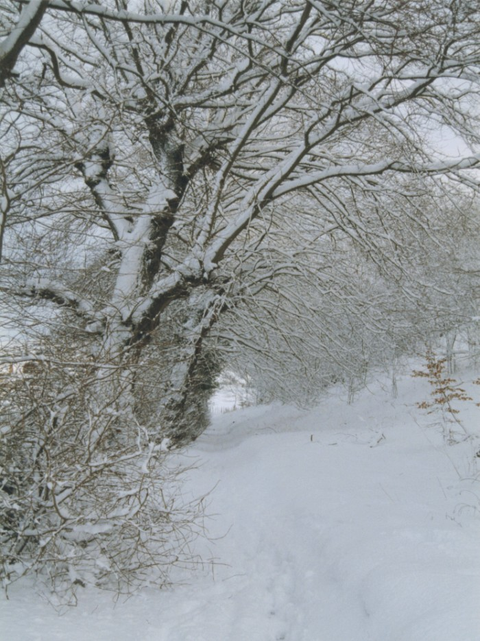 The Stroopy Road in Winter clothing.