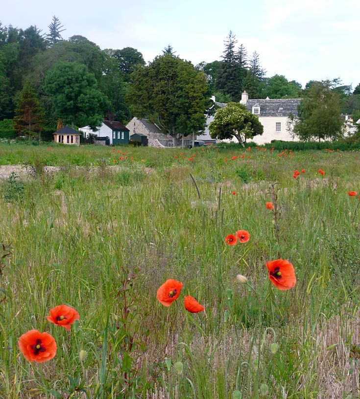 Wild Poppies and The Kennels