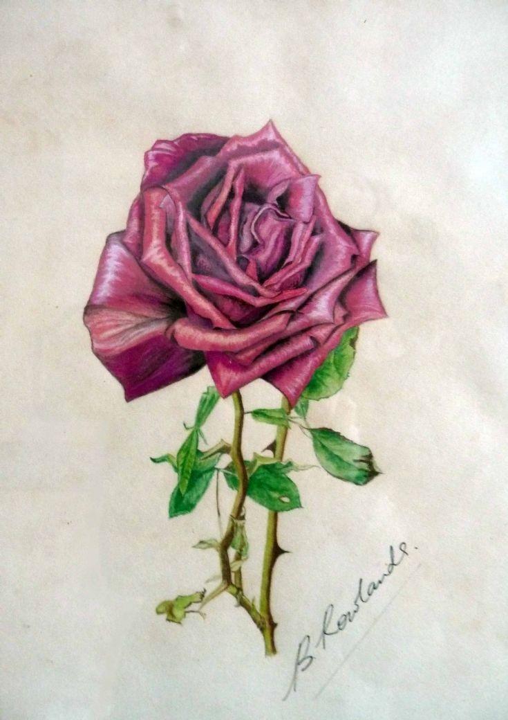Rosenberg Rose