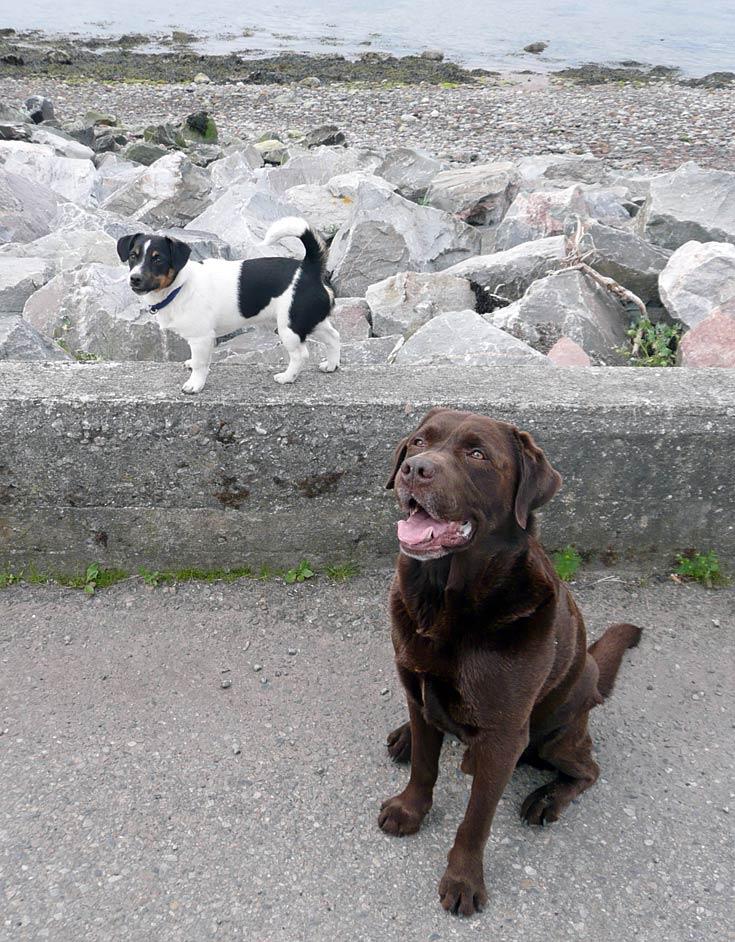 Dougie with new friend Maxy