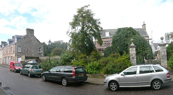 Forsyth House - Sycamore Tree removed