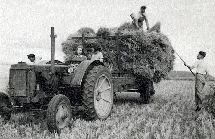 Harvest at Rosefarm in 1946