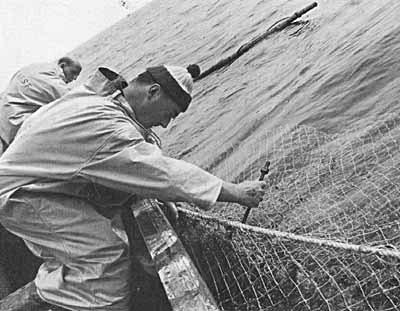 Salmon Fishing 1969