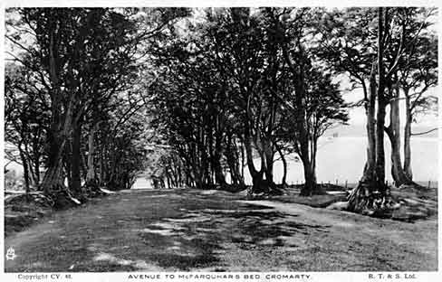 Avenue of trees down to McFarquhar's Bed